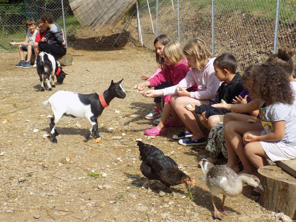 Camping avec animaux dans le Tarn