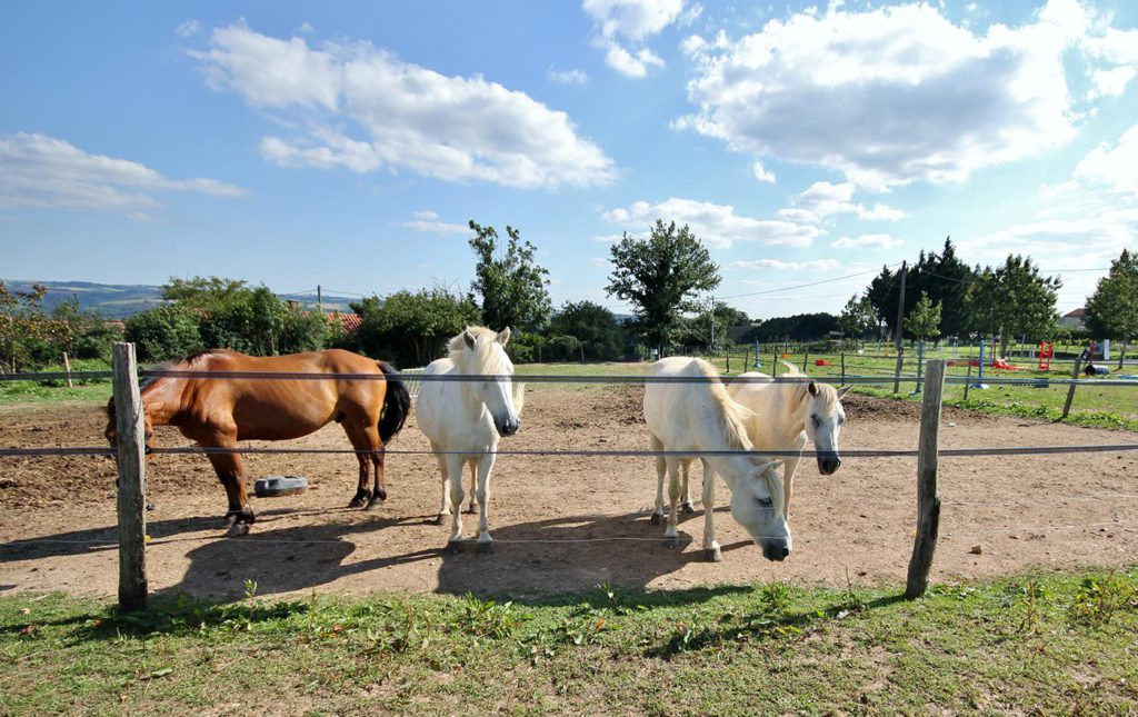 Camping Tarn avec centre equestre